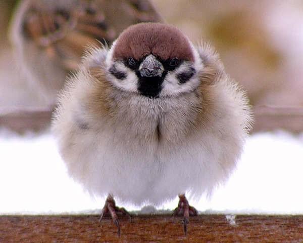 雀始めて巣くう|練馬
