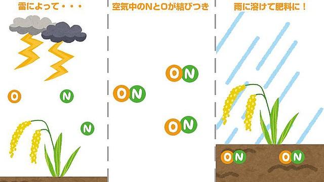 練馬の雷と植物