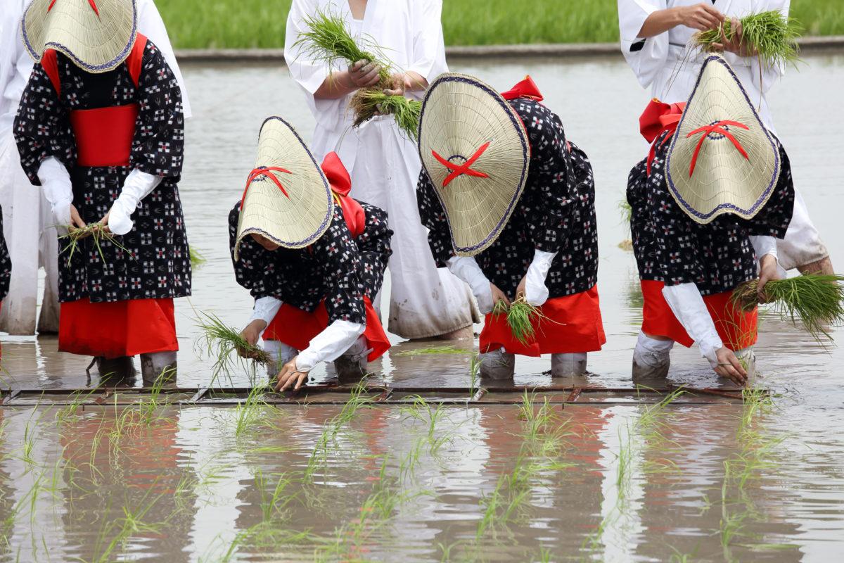 練馬から観た十六団子の儀式