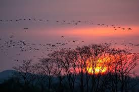 夕暮れの渡り鳥