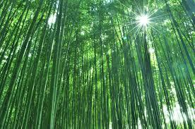 電球に使用された竹