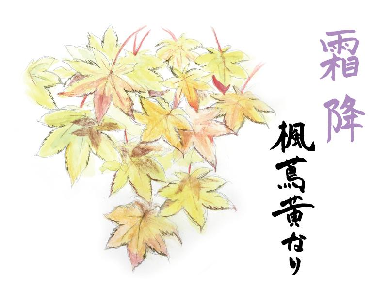 楓蔦黄なり