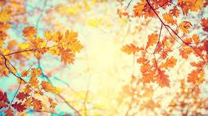 紅葉の中の小春日和