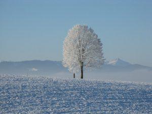 閉塞く冬と成る