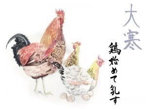 鶏始めて乳す(にわとりはじめてにゅうす)