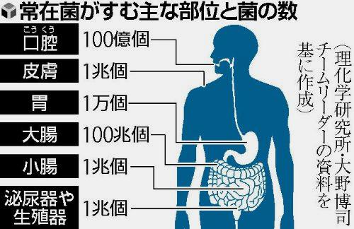 常在菌がすむ主な部位と菌の数