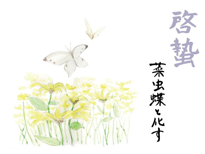 菜虫蝶と化す